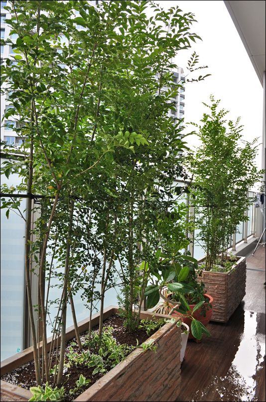 ベイビューのバルコニーに緑を添えるプランター植栽 江東区a様邸
