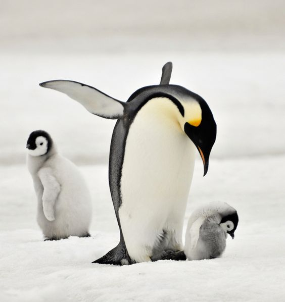 It's a lovely day to be a penguin.