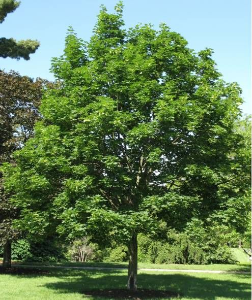 Emeralds, Queen And Shade Trees On Pinterest