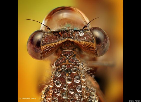 Dew-Soaked Bugs Are 'Small Monsters' In Ondrej Pakan's Macro Photo Series (PHOTOS)