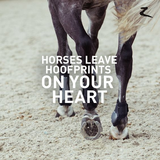 Horses leave hoofprints on your heart - Horse of a lifetime quote inspiration
