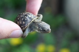 ............tiny turtle!                                                       …