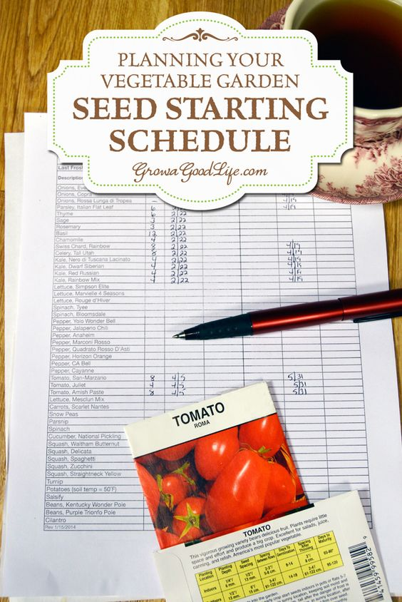 When is the best time to start seeds? Start some seeds too soon and you will end up with lanky plants under the lights. Too late and the plants will be too weak when transplanted to the garden or may not mature in time to produce before your frost.   Develop a seed starting schedule so you know the optimum time to start your seeds. A seed-starting schedule provides a guideline of when to sow seeds and when to transplant seedlings the vegetable garden.