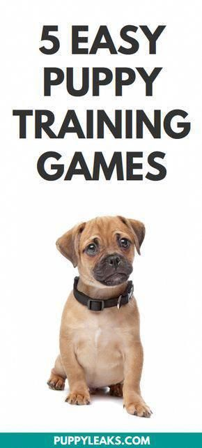 Looking For Some Fun Games To Play With Your Puppy Interactive