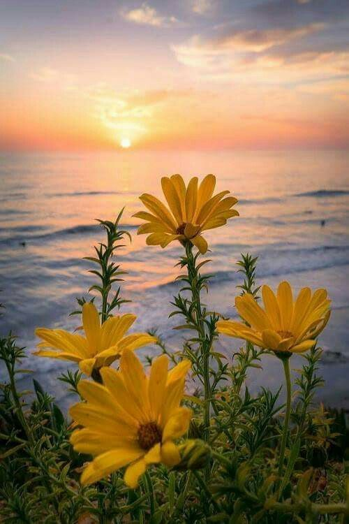Beautiful Flowers With The Ocean Beautiful Flowers Ocean Nature Photography Beautiful Landscapes Beautiful Nature