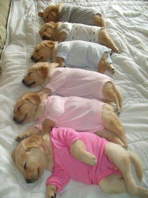 The Only Reason I Ever Want To Buy Baby Onesies Again