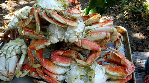 how to cook crab humanely