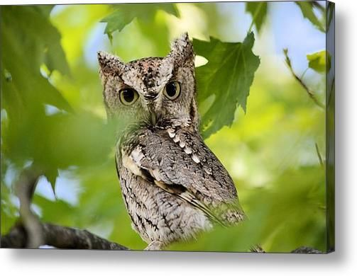 #Who Are You Acrylic Print By Bonfire #Photography