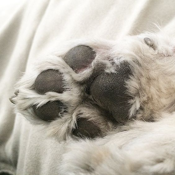 @jackiecous's photo: paw