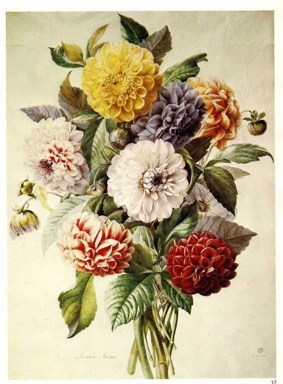 Dahlias & Roses 2 Vintage Botanical Illustrations by ...
