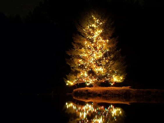 My friend took this stunning photo of this Christmas tree for me ...