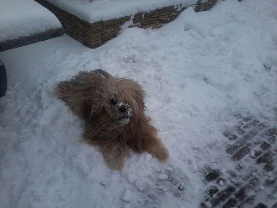 Bono dollen in de sneeuw!!