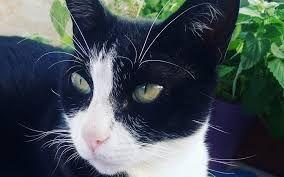 Resultado de imagem para catnip catup