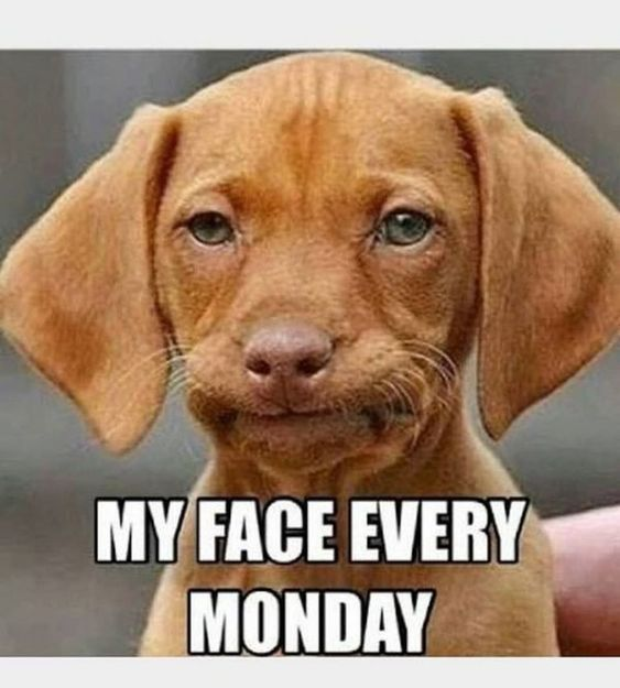 75 Funny Monday Memes For The Week Funny Monday Memes Monday Humor Monday Memes