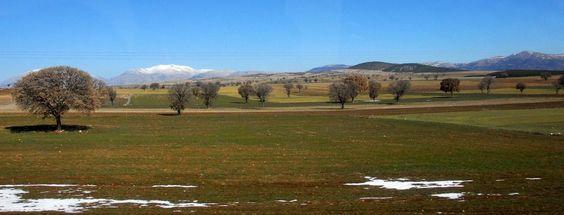 Afyon トルコの麦畑の木は「男性の玉座」