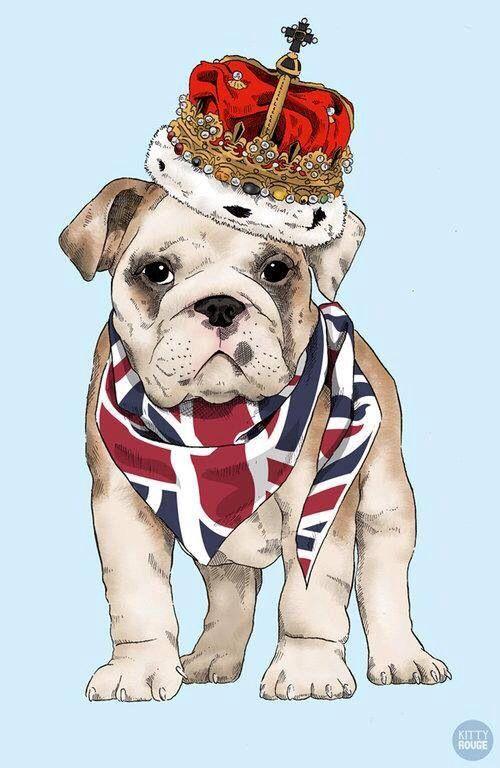 British Bulldog perros Pinterest British, Bulldogs