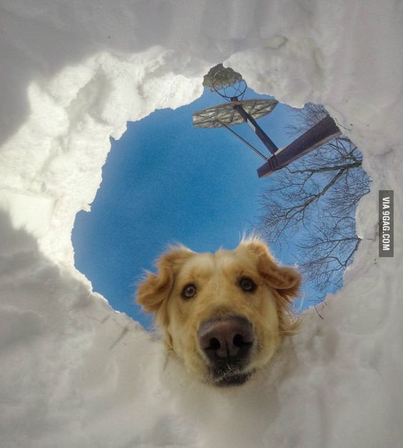 When you get buried in snow but your dog is a retriever - 9GAG