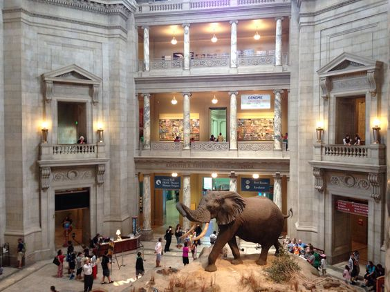 Museum of Natural History. #dctrip14