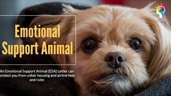 Esa Letter Emotional Support Animal Big Dogs Support Animal