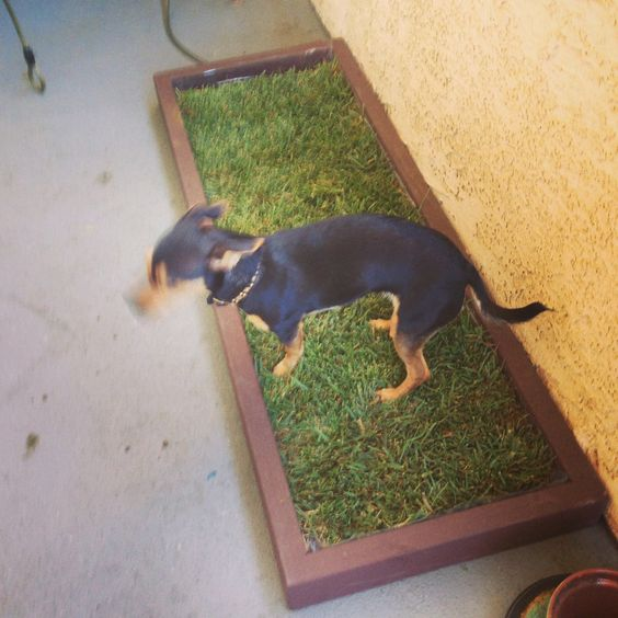 doggy and the city small dog litter box won 39 t take up the