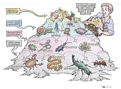 Pin By M Hodge On Ecology Ecosystem Ecology Design Compost