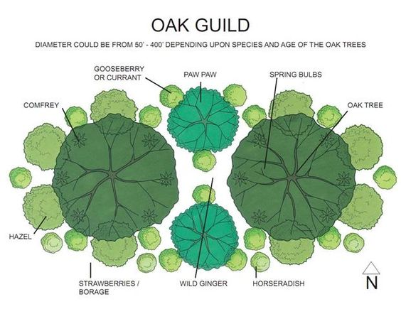 permaculture guilds | Plant Guilds Midwest Permaculture