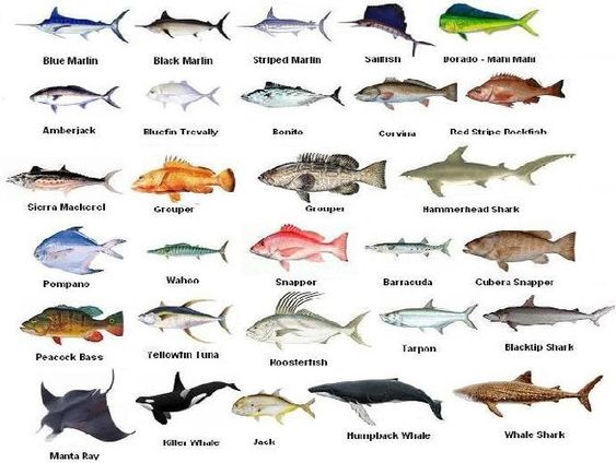 Pinterest the world s catalog of ideas for What kind of fish do i have