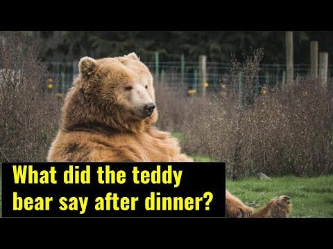 Funny Jokes About Bear In 2020 Bear Jokes Funny Jokes And Riddles Jokes And Riddles