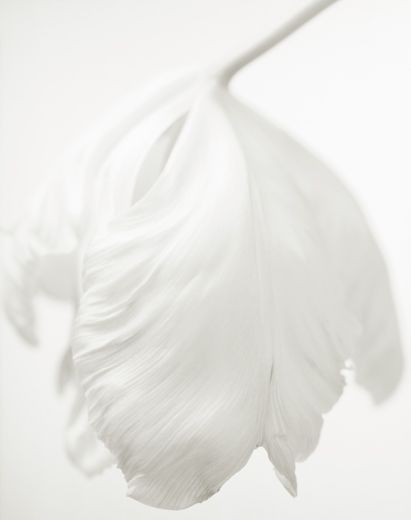 yama-bato YUMIKO IZU PHOTOGRAPHY SECRET GARDEN - BLANC  Blanc 56 #fotografie…