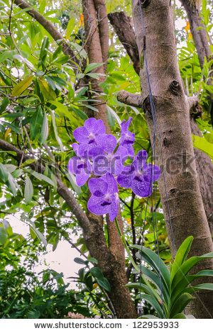 Beautiful bunch of purple orchid in garden, Phuket, Thailand - stock photo