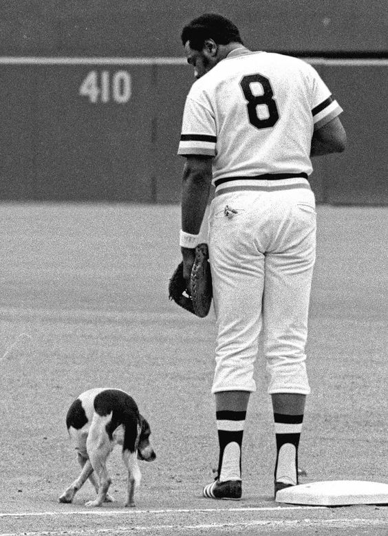 Pittsburgh Pirates first baseman Willie Stargell (8), and a dog that strayed onto the field, eye each other up during the playing of the national anthem before the Pirates - Mets doubleheader in Pittsburgh July 28, 1972.  After visiting Stargell, the first base umpire and Pirates pitcher Nelson Briles, the dog was eventually escorted from the field by a security guard.  (AP Photo/RAD)