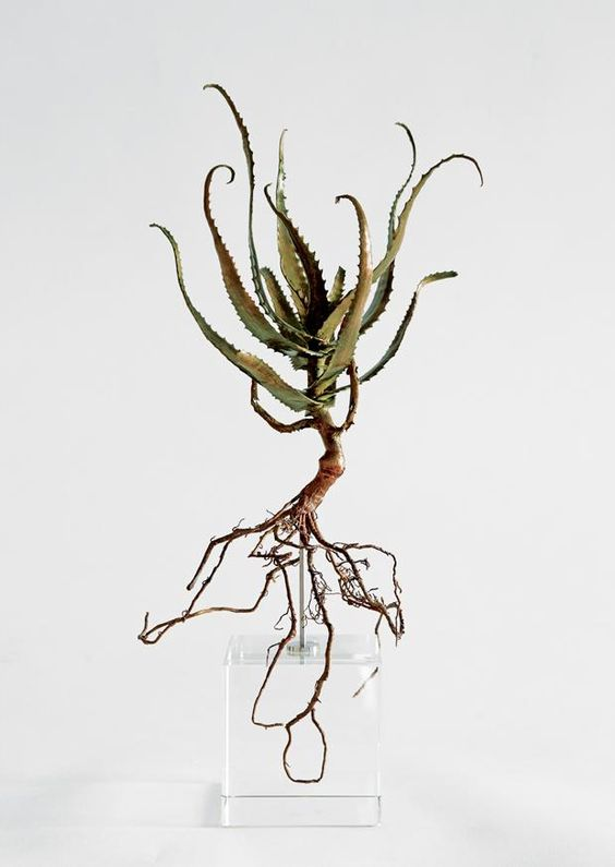 South African artist Nic Bladen tracks down endangered plants and casts them in bronze and other materials. Here he renders the natural grace of Aloe pluridens.
