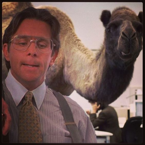 Um.. Yeah.. if you could just stop asking if we know what day it is.. THAT WOULD BE GREAT! Happy #nationalbossday! #humpday #wednesday #officespace #mike #humpdaycamel