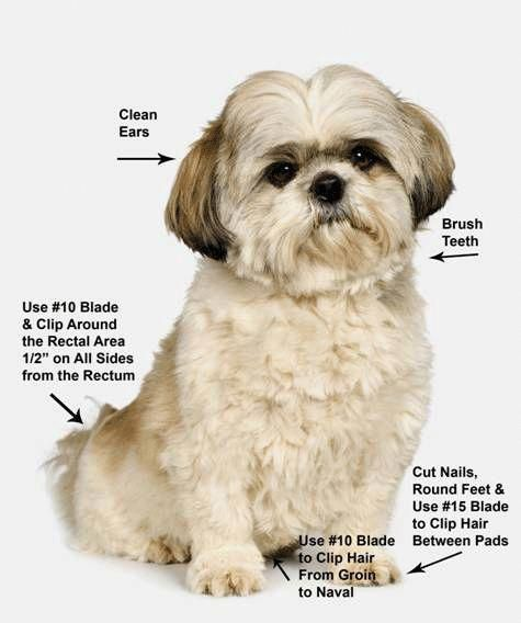 Pin By Adrienne Risby On Shih Tzu In 2020 With Images Shih Tzu Grooming Puppy Grooming