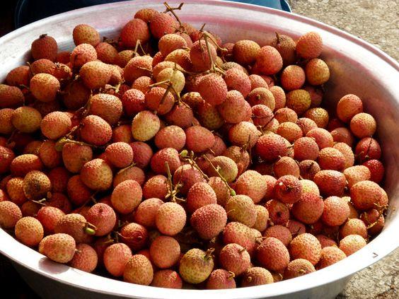 lychees, un panier plein