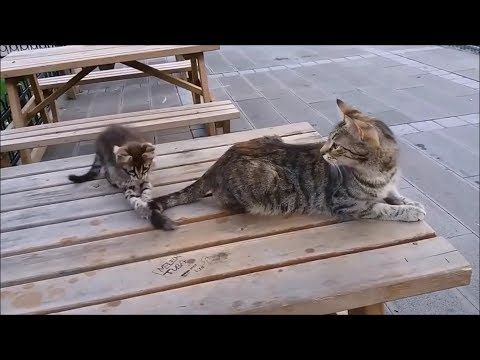 Mama Cat S Reaction To Her Kitten When Kitten Biting Her Tail Youtube Kitten Biting Mama Cat Cats