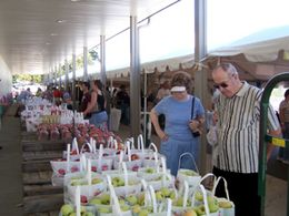 Apple & Wine Festival   September 15 & 16, 2012  Altamont Fair Grounds, Altamont, NY  Saturday 10-6pm and Sunday 10-5pm. Glenora Wine Cellers will be pouring at this event. Hope to see you there!
