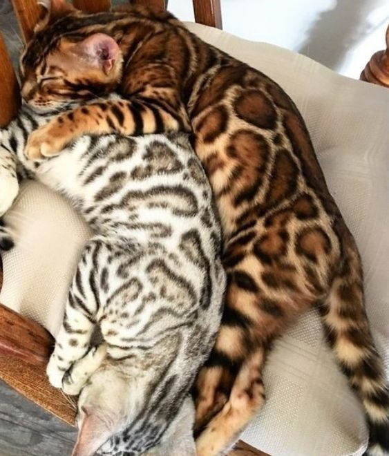 5 Reasons Why You Should Have A Cat At Home Cute Baby Animals Cute Cats Cute Cats And Kittens