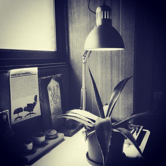 書斎の竜舌蘭