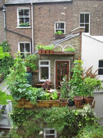 CITY HARVEST, SHOREDITCH STYLE: This tiny terrace kicks out up to 80kg of veg a year.