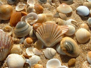 Kitchen Witch School of Natural Witchery: The magic of Sea Shells
