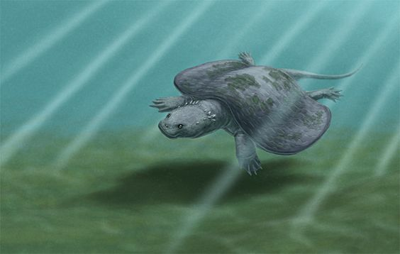 Daily Paleo Art Month #10: Henodus  Much like the not-a-rabbit from a couple of days ago, this creature wasn't a turtle. It was actually a member of a Triassic marine reptile group known as placodonts, which were closer related to plesiosaurs than anything resembling a chelonian. Henodus here came from the Late Triassic of Germany, around 225 million years ago, and reached lengths of about 1m (3.3ft).  Henodus is the only placodont found in non-marine deposits, living in brackish lagoons or…
