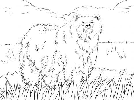Alaskan Grizzly Bear coloring page PRESCHOOL Brown