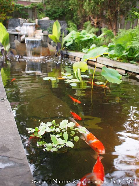Stone water features koi ponds and koi on pinterest for Fish pond features