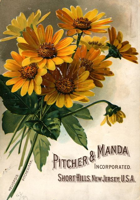 Old Seed Catalog