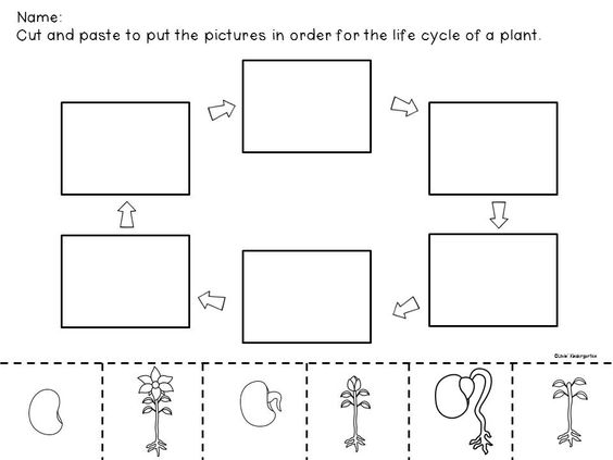 Life Cycle of a Plant ELA Science and Anchor Charts – Life Cycle of a Plant Worksheet for Kindergarten