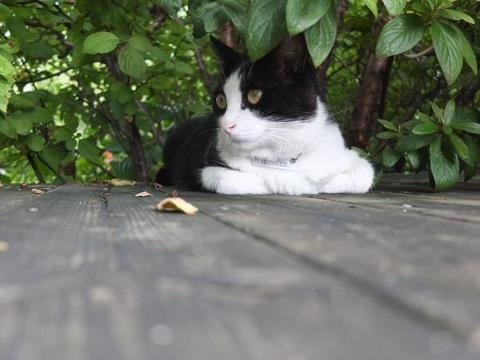 [2012.11.02] 길냥이 X10     후지필름 5기 객원리포터 연세대 김혜인 님의 작품입니다.     X10으로 고양이 카페의 고양이를 담았네요.       신비로운 색의 고양이 눈이 인상적입니다.     다가오는 주말 고양이의 감성으로 자유로운 여행을 즐겨보시는 건 어떨까요?     <사진정보>     조리개값: F/2.2   노출시간: 1/170초   ISO감도: ISO-200   초점거리: 10mm     http://blog.naver.com/fujifilm_x/150148128376