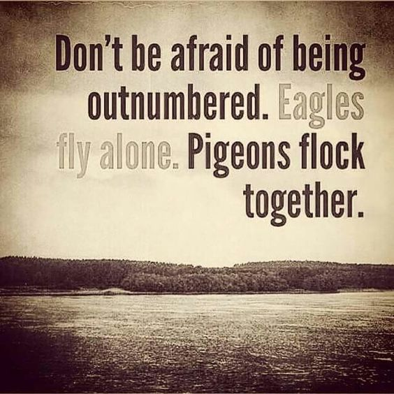 don t be afraid of being outnumbered eagles fly alone