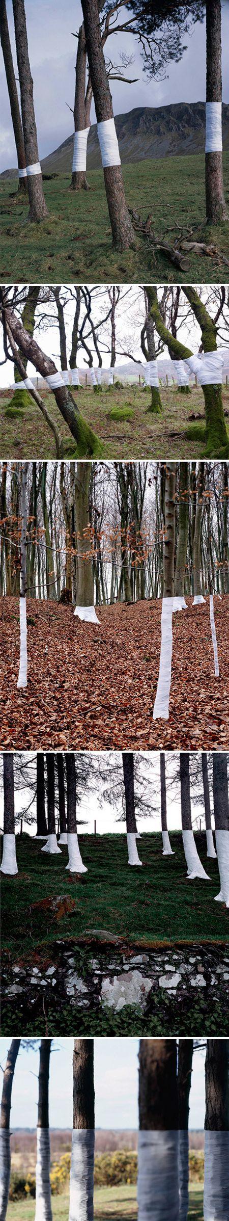 zander olsen - trees, white wrapping, and the horizon <3