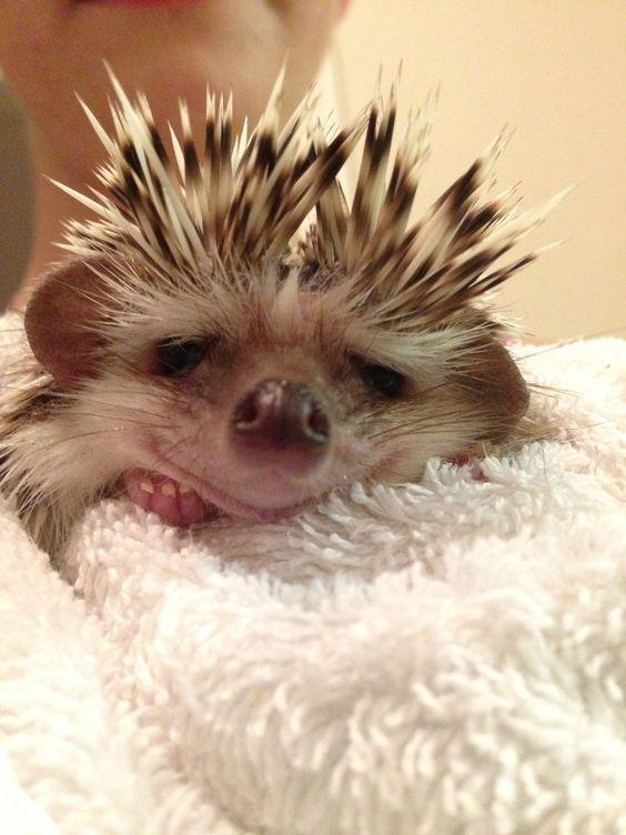 Hedgehog baby. www.reddit.com